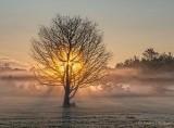 Sunrise Through Ground Fog P1440051-7