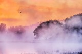 Misty Otter Creek At Sunrise P1440072-8