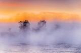Trees In Sunrise Mist & Ground Fog P1440079-85