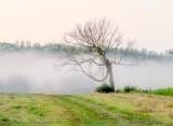Ground Fog Beyond Dead Tree P1440570-4
