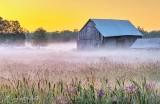 Barn in Sunrise Ground Fog P1440796-02