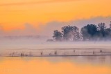 Gemmells Point In Misty Sunrise P1450345-51