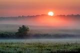Sunrise Through Ground Fog P1450779