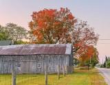 Barn & Autumn Tree P1450877-83