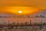 Sunrise & Contrail Through Ground Fog P1460298-4