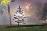 Centennial Park On A Foggy Night P1470232-8