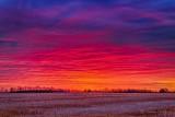 Fiery Sunrise P1470491-7