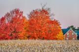 Autumn Farmscape P1470519-25