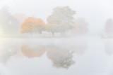Autumn Trees In Fog P1470773