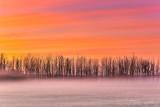 Bare Trees In Ground Fog At Sunrise P1470897-03