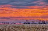 Cornfield Sunrise P1470946-52