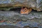 Chippie In The Rocks P1480226