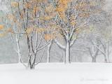 Autumn Snowfall P1010677