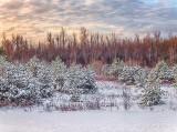 Autumn Snow P1010778-80