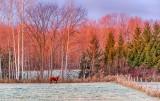 Trees In Sunrise Glow P1480114-18