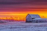 Barn In Wintry Sunrise P1490508-14