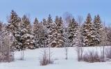 Winter Wonderland P1520006
