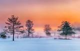 Trees & Sunrise Ground Fog P1520158-64
