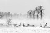 Fence & Ground Fog P1520265