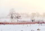 Trees In Sunrise Ground Fog P1520176