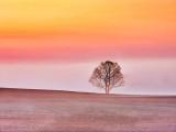 Tree & Ground Fog At Sunrise DSCN15275