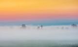 Trees In Sunrise Ground Fog DSCN15244