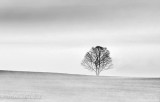 Tree & Ground Fog DSCN15275BW