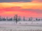 Ground Fog At Sunrise DSCN18385-7