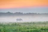 Equine Pal In Ground Fog At Sunrise P1540631