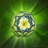 Flower Bud DSCN25347