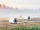 Rolls In The Hay (Stubble) DSCN26598