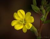 Bug In A Yellow Wildflower DSCN34419