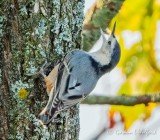 Other Birds of Smiths Falls