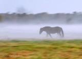 Ground Fog & Mist Gallery