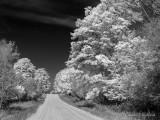 Autumn Back Road (faux IR) DSCN34840