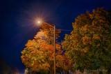 Autumn Streetlight P1560466-72