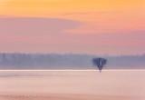 Lone Tree In Sunrise Ground Fog DSCN39562