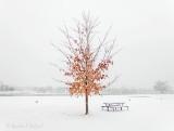 Winter Autumn Leaves P1030423