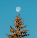 Spruced Up Moon DSCN47273