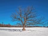 Lone Tree DSCN47520