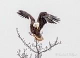 The Eagle Was Landing DSCN45992