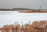 Frozen Swale DSCN48509