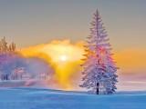 Frost & Mist At Sunrise DSCN48652-4