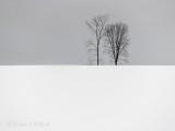 Two Winter Trees Beyond A Snowy Hill DSCN49041