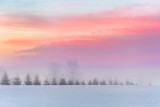 Line Of Trees In Sunrise Fog P1590070