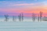 Ground Fog Beyond Winter Trees At Sunrise P1590149