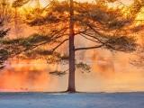 Misty Sunrise Beyond A Pine DSCN50044