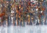 Misty Lake Martin 26219
