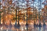 Autumn Lake Martin 25894