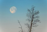 Moon & Budding Tree DSCN52514